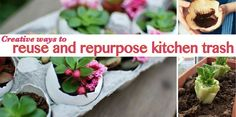 Creative ways to reuse and repurpose kitchen trash