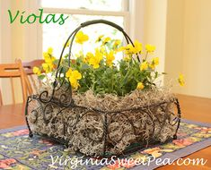Violas in Southern Living at Home Jamestown basket
