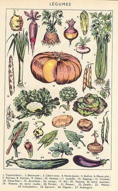 Vintage Botanical Prints, Vintage Prints, Vintage Posters, Cute Poster, Poster Wall, Poster Prints, Nature Posters, Hippie Art, Room Posters