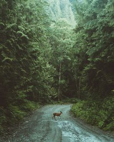early morning trek in the forest of British Columbia, Canada. by Berty Mandagie Photography Scenic Photography, Nature Photography, Portrait Photography, Early Morning, British Columbia, The Great Outdoors, Woodland, Places To Go, Beautiful Places