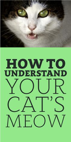 How To Understand Your Cat's Meow