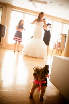 Navy & Pink Nautical Themed Wedding via http://www.weddingcolors.net/navy-pink-green-nautical-themed-weddinglindsay-t-j.html | Photo by: candacejefferyphotography.com