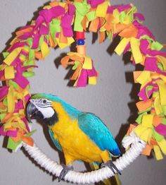 Parrot Island Bird Toys. Rainbow_Swing