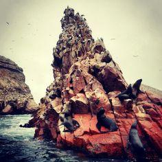 Islas ballestas, Peru, Ica