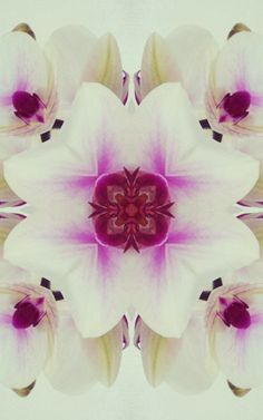Abstract Orchid by Zephyr