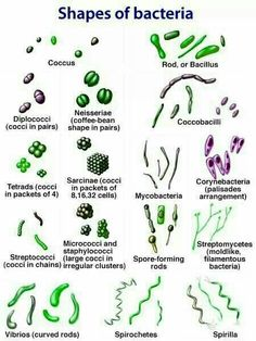 Bacteria shapes...you know...just in case...