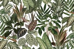 You'll find the curious monkey and his brisk friends hiding amongst the lush green foliage of this wallpaper. The jungle you create looks straightforward at first glance, whether it's on one wall or throughout a room – only revealing the hidden cheeky monkeys on closer inspection.