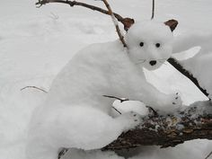 This is just so cute. Creative people. Snow   cat.