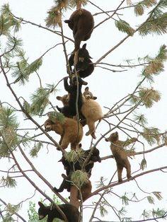 A wonderful bunch of bears