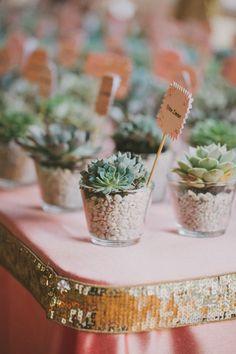 mini plant favors