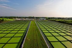 La NASA experimenta con granjas de algas para crear biocombustibles.  Una buena alternativa al petroleo y esas cosas