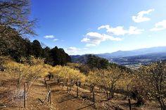 Hotosan, Saitama JAPAN