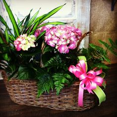 Hydrangeas for Valentine's Day!