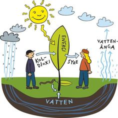 Fotosyntes är den process hos gröna växter vid vilken kolhydrater bildas av koldioxid och vatten med solljus som energikälla. Primary Science, Elementary Science, Science For Kids, Science And Nature, Teacher Education, School Teacher, Teaching Biology, Teaching Tips, Learn Swedish