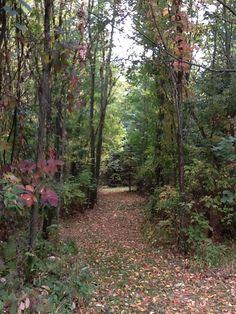 Bridle path on my farm