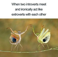 Hilarious Memes That Will Make Every Introvert Laugh Out Loud Introvert Meme, Introvert Problems, Stupid Funny Memes, Funny Relatable Memes, Animal Memes, Funny Animals, Really Funny, Laugh Out Loud, Laugh Laugh