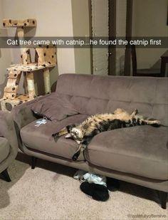 Cat on catnip ☺