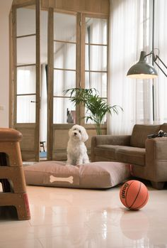 fatboy doggie lounge bed stonewashed - small - Desert River Online Shop www. Furniture Packages, Online Furniture Stores, Interior Design Services, Quality Furniture, Dog Bed, Floor Chair, Things That Bounce, Bean Bag Chair, Lounge