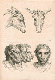 """""""Dissertation sur un traitè concernant le rapport de la physionomie humaine avec celle des animaux"""" Charles Le Brun."""