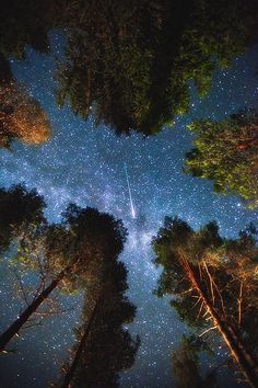 trees.  starry sky.  shooting star