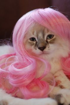 Kitty Manaj!! Barnes and Nobles has a whole book in the humor section dedicated to cat's with wigs on....its hilarious