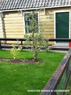 Oude Elstar appelboom (oude fruitboom) uit het assortiment van Schouten Bomen en Loonbedrijf Outdoor Structures