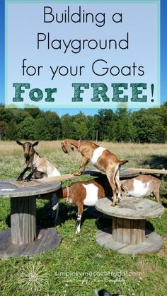to build a goat playground for free! If you like rustic, natural and free then this playground for your goats is what you need!If you like rustic, natural and free then this playground for your goats is what you need! Pigmy Goats, Boer Goats, Keeping Goats, Raising Goats, Diy Goat Toys, Goat Playground, Playground Ideas, Goat Shelter, Goat Pen