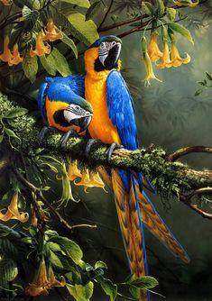 Exotic Birds, Colorful Birds, Macaw Parrot For Sale, African Grey Parrot, Tropical Art, Wildlife Art, Animal Paintings, Bird Art, Beautiful Birds