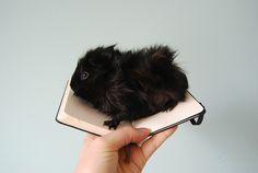 Guinea pig~