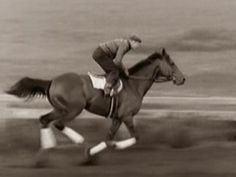Seabiscuit Race Horses, Horse Racing, All The Pretty Horses, Beautiful Horses, Triple Crown Winners, Honor Roll, Horse Breeds, Thoroughbred, Kentucky Derby