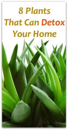 8 Plants That Can Detox Your Home - Natural Holistic Life