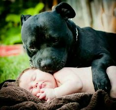 Taste that baby, tasting the baby, they adore children of all ages, just want to lick everyone. Such a sweet image!