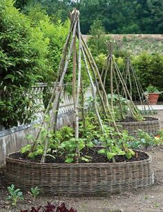 Round raised beds built with tepee trellises