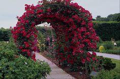 Rose Flower Garden | Beautiful Rose Flowers Garden Pics | All Flowers | Send Flowers ...