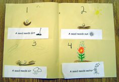great spring planting/science activity.