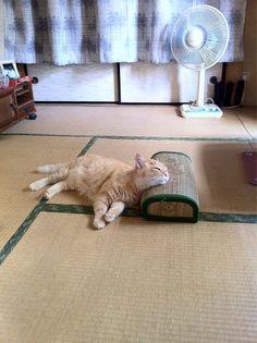 summer napping #cat #japan 日本の夏
