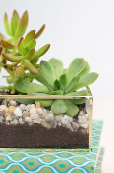 DIY Acrylic and Gold Succulent Planter | Damask Love