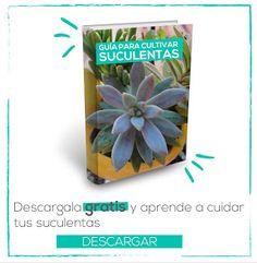 Guia para cultivar suculentas