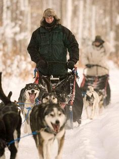 Dog sledding in the UP. Click for more info.