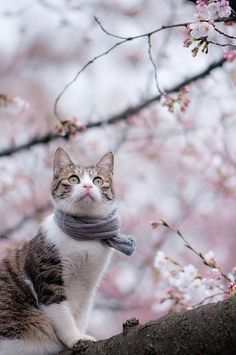 A cat wearing a scarf in a  tree