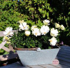 Ib Laursen, Danish Design, flowers, white, Havets Sus, Denmark