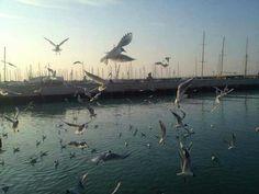In una solare giornata di marzo i gabbiani non mancano al porto!