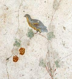 l'oiseau et les mûres-oplontis