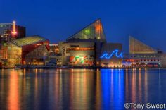 National Aquarium in Baltimore, Maryland. Went when I was in middle school.  Amazing, from what I remember.