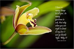 what do you think of this flower and quote
