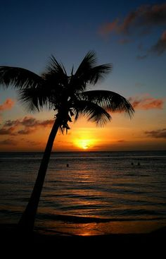 coconut palm tree at sunset - nice! I love photos of palm trees. I was surprised to learn there are species. Florida is palm tree heaven. Florida Palm Trees, Palm Tree Sunset, Palm Trees Beach, Sunset Beach, Beautiful Sunset, Beautiful Beaches, Amazing Sunsets, Coconut Palm Tree, Photo Images