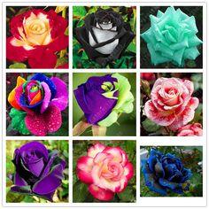 100pcs/bag rose seeds black rose so charming bonsai flower seeds rare and precious perennial flowers plant for home garden