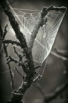 spider web Photography by Patrick Hübschmann Macro Photography, Amazing Photography, Shape Photography, Foto Art, Black And White Pictures, Belle Photo, Black And White Photography, Cool Photos, World