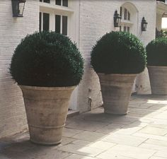 Giant boxwood planters or giant urns or pots to be seen through floor to ceiling… Garden Urns, Garden Pool, Garden Planters, Garden Landscaping, Planter Pots, Boxwood Garden, Boxwood Planters, Boxwood Topiary, Container Plants