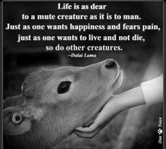 Life is as dear to a mute creature as it is to man. Just as one wants happiness and fears pain, just as one wants to live and not die, so do other creatures -Dalai Lama Dalai Lama, Lama Animal, Animals And Pets, Cute Animals, Strange Animals, Nature Animals, Baby Animals, Vegan Quotes, Vegetarian Quotes